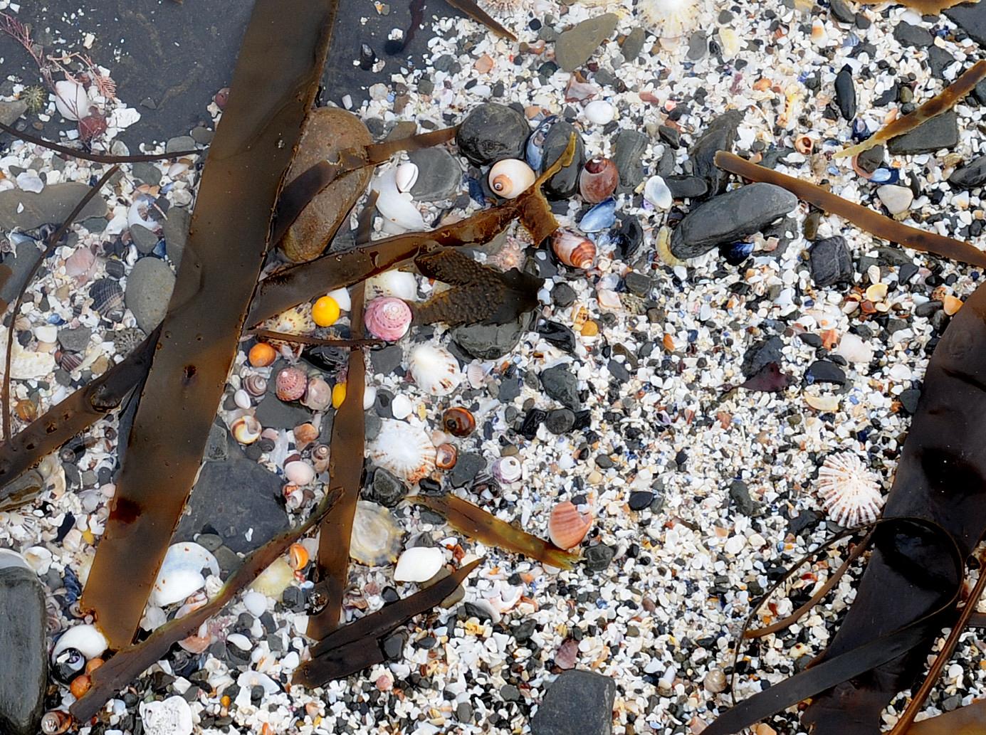 Find a Groatie Buckie on Brims beach.